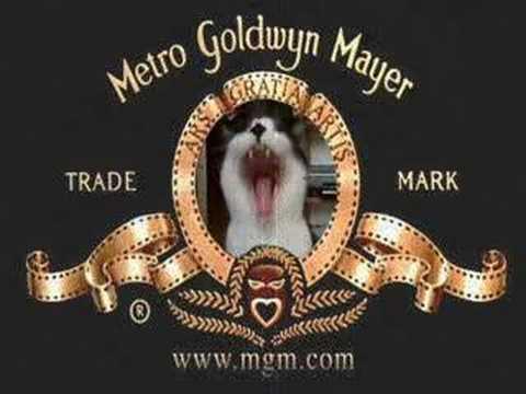 MGM cat
